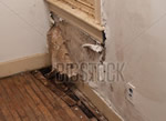fire and water damage repair